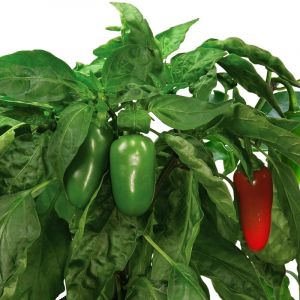 Jalapeno Pepper Seed Pod Kit (9-Pod)
