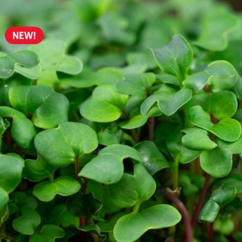 Spicy MicroGreens Mix Seed Packet