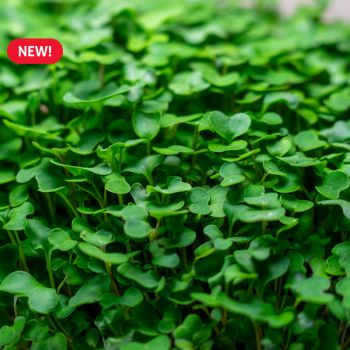 Superfood MicroGreens Mix Seed Packet