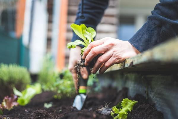 Getting Started: Container Gardens, Raised Beds, and In-Ground Gardening