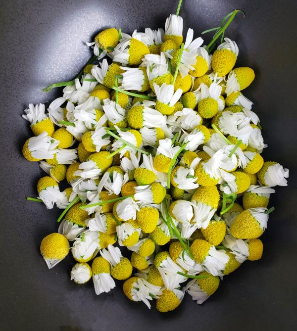 Make Your Own Chamomile Tea