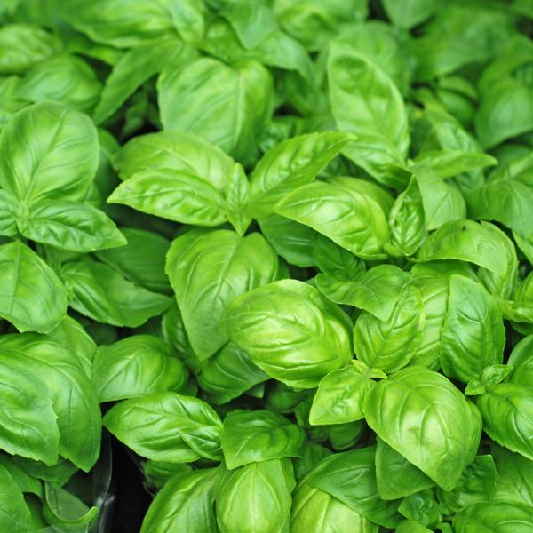 5 Herbs Everyone Should Grow at Home