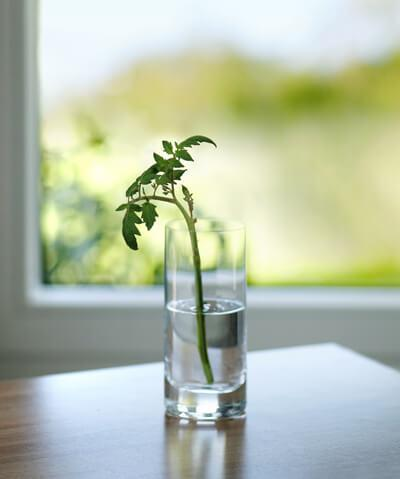Indoor Gardening 101: Water, Water, Everywhere!