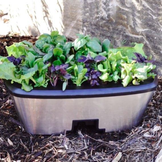 Moving Your Seedlings Outdoors