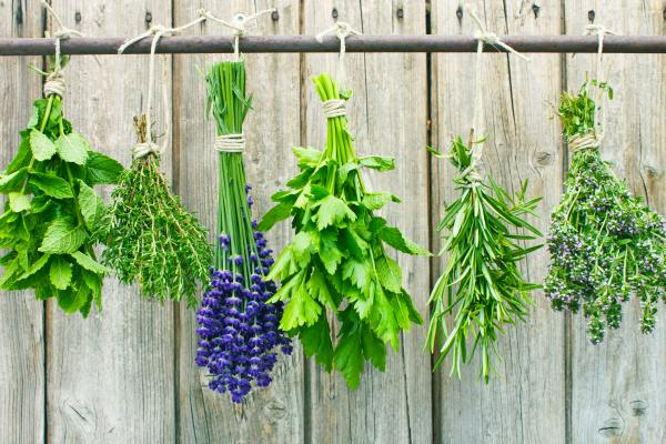 How do I harvest, dry, or store my herbs?