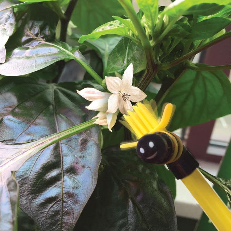 How to Pollinate AeroGarden Tomatoes and Peppers