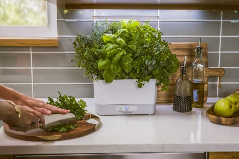 What To Expect From AeroGarden Plants