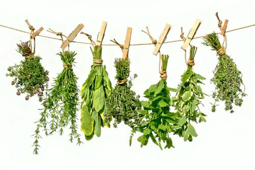 10 Healthy Herbs and How to Use Them