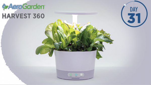 New Harvest AeroGarden Timelapses