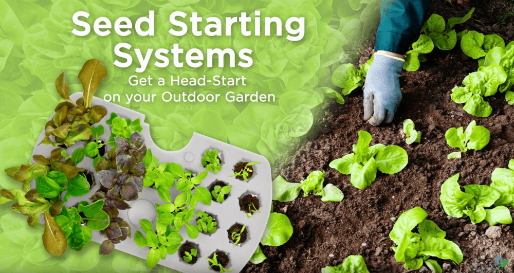 Start your Cold Weather Crops