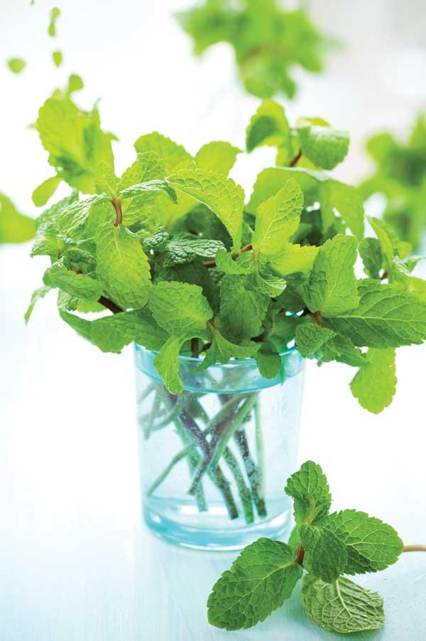 Mint Mojitos