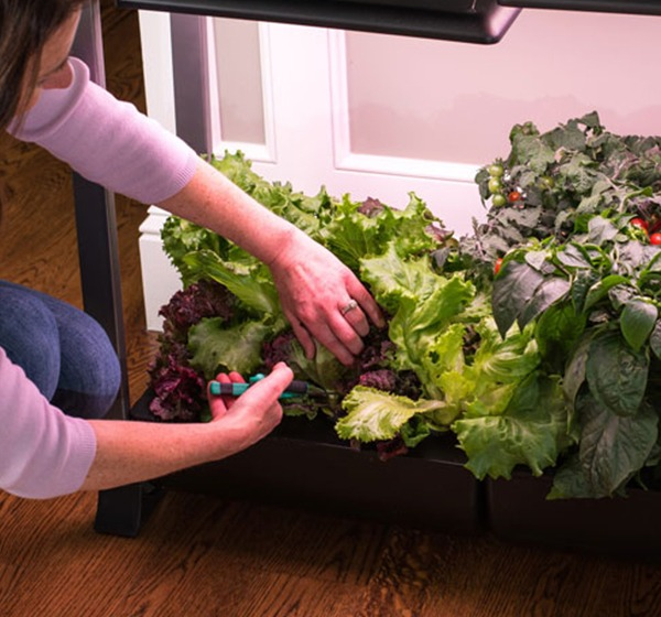 Indoor Gardening Month - AeroGarden Tips