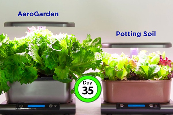 Why plants grow 5 times faster in an AeroGarden than those grown in soil