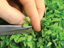 Pruning your Herb Garden for Maximum Harvest and Beauty
