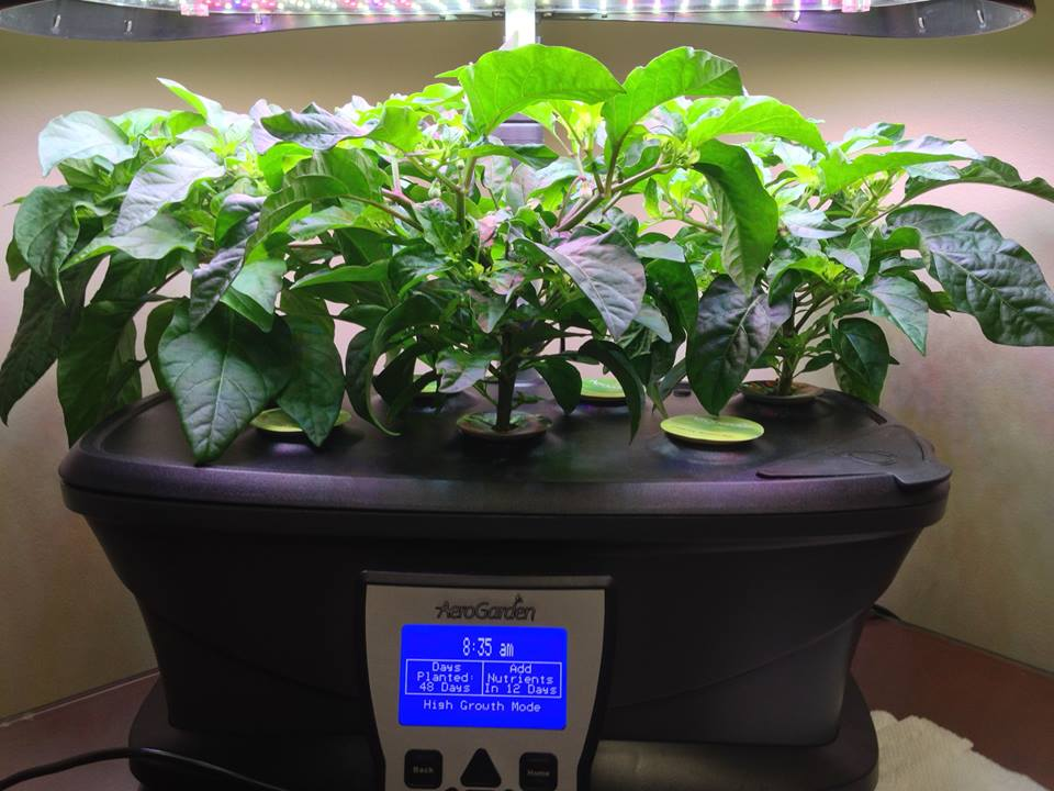 Here Come The Hot Peppers!