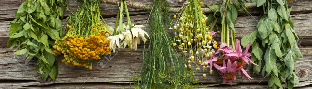 Five Everyday Herbs For Indigestion