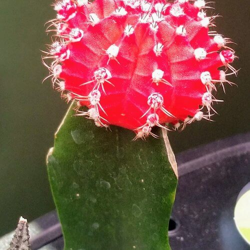 Did You Know You Could Grow Cacti?!