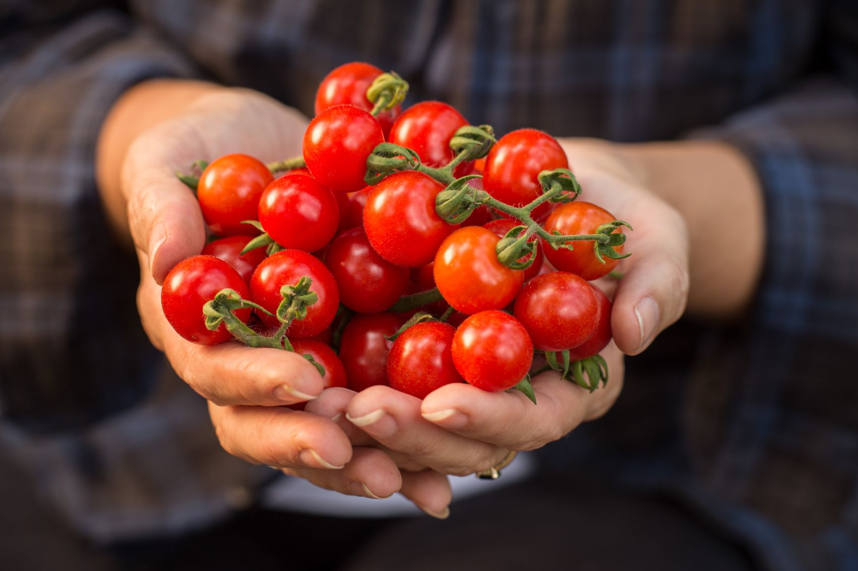 How to get flowering tomatoes to set more fruit