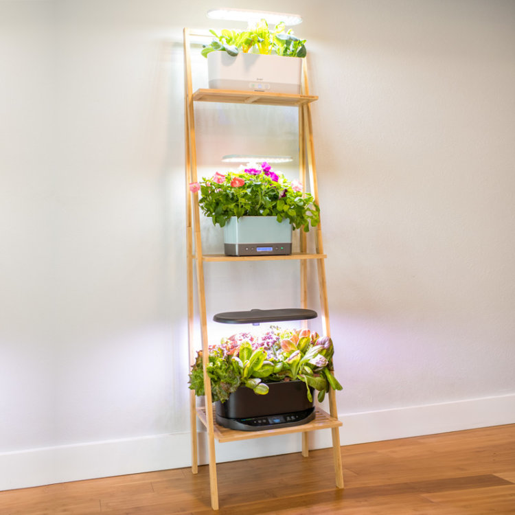 Bamboo Garden Wall Shelf Set-Up