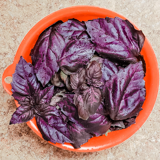 Purple Basil Recipes