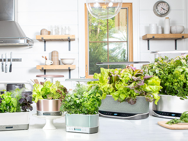 AeroGarden Makes Growing Indoors Easy